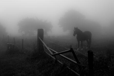 Paard horse mist fog