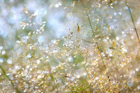 summer grass zomer gras