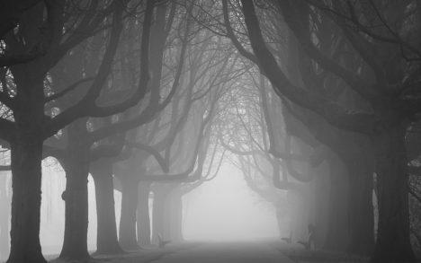Park Trees Mist Bomen