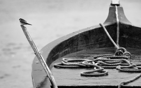 Boat Bird