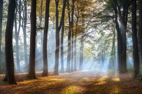 herfst bos mist autumn fall