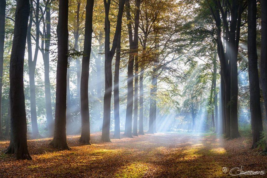 herfst bos mist autumn fall