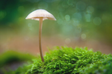 paddestoel mushroom