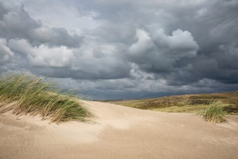 Dutch Dunes - Hollandse duinen