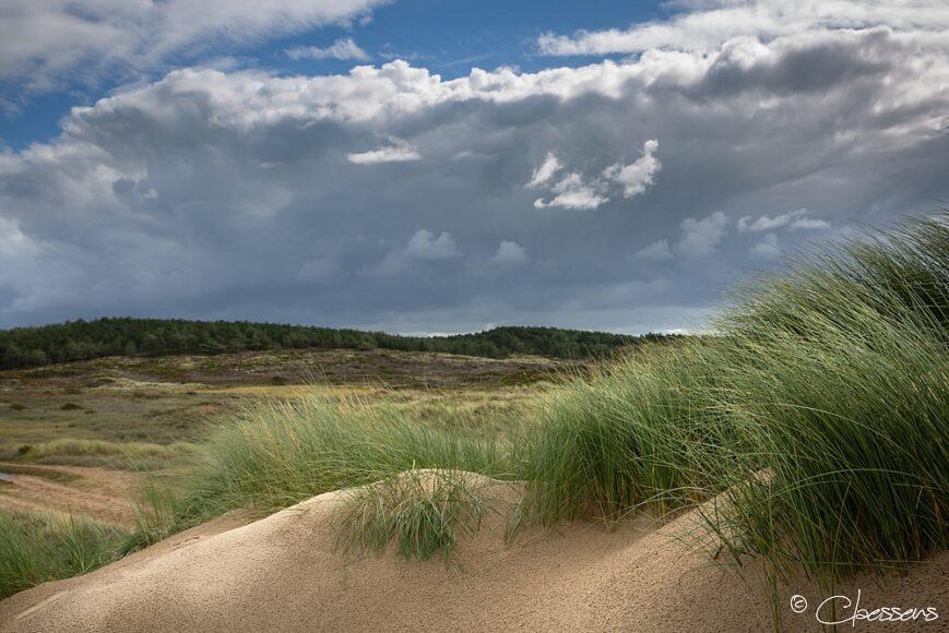 Dutch Dunes - Hollandse duinen