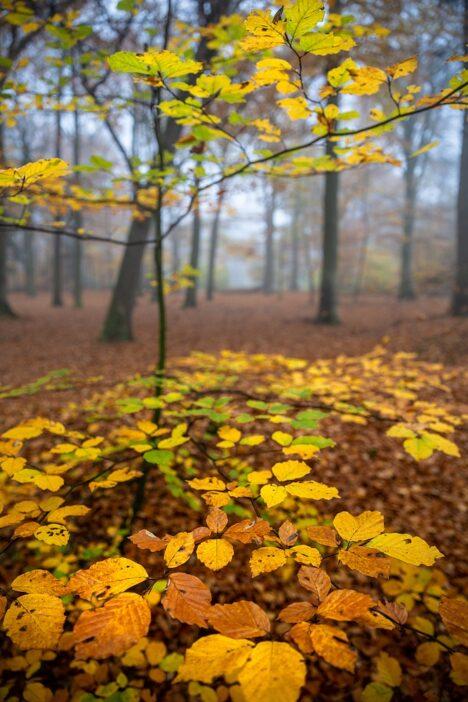 Gele Herfstblaadjes