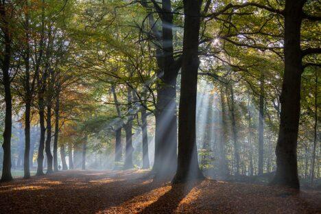 herfst bos mist