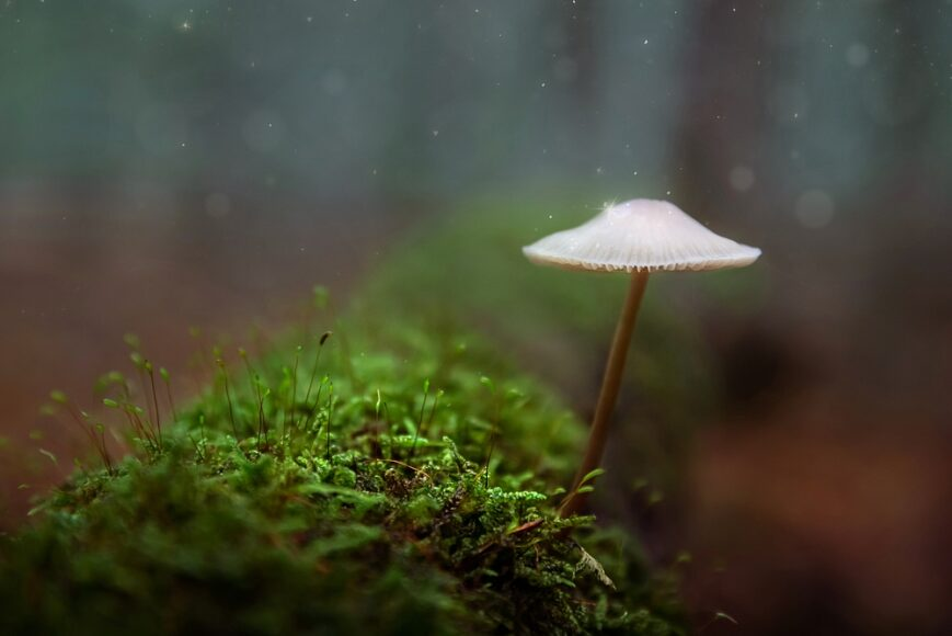 Mycena paddestoel herfst sprookje bos