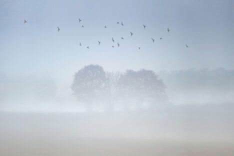Bomen in de mist, Nederland