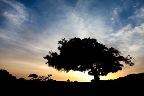 Morocco sunset tree